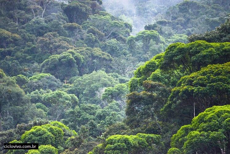 5 de Junho: Lute pelo Meio Ambiente.