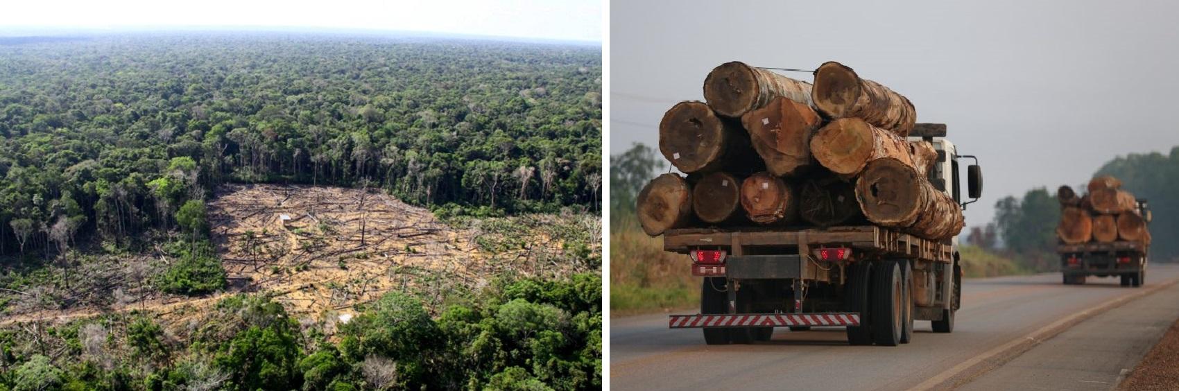 """""""Desmatamento mínimo aceitável"""" é inaceitável, Gen. Mourão!"""